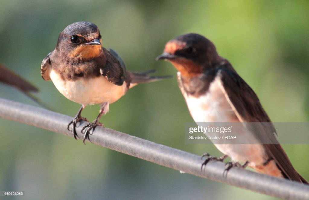View of birds : Stock Photo