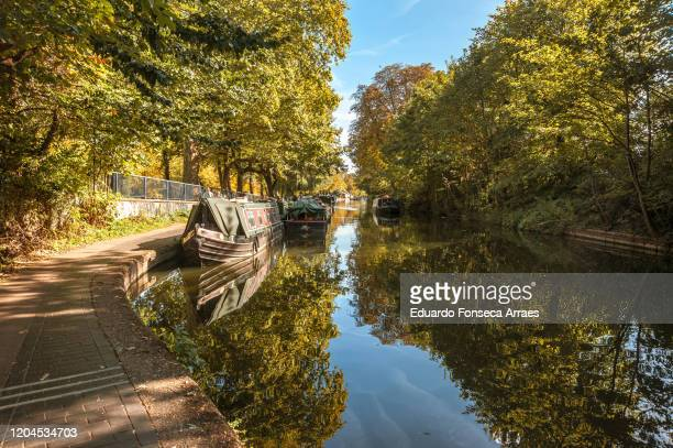 view of boats and trees reflected on regent's canal next to victoria park, against a sunny clear blue sky - autumn stock pictures, royalty-free photos & images
