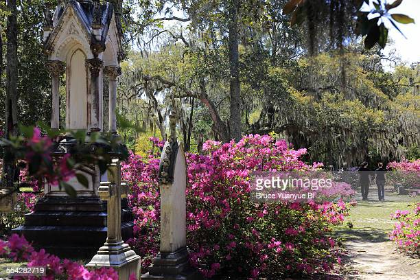 View of Bonaventure Cemetery