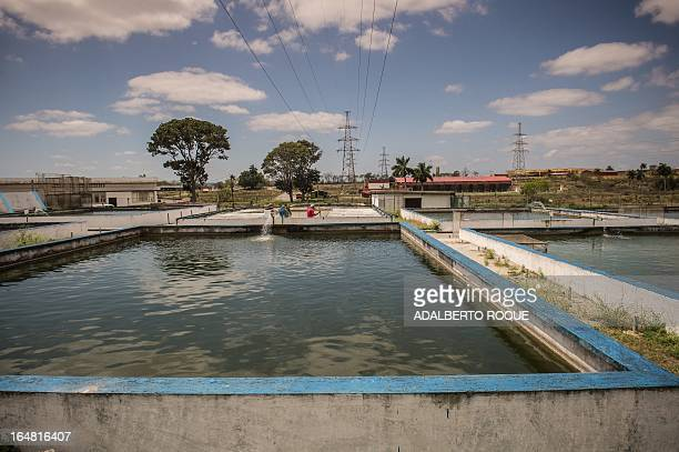 View of breeding ponds for African sharptooth catfish and Red Tilapia fishes at the Aquaculture Technologies Company on March 28 in Cotorro...