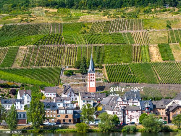 view of bremm at the mosel, germany. - moselle imagens e fotografias de stock