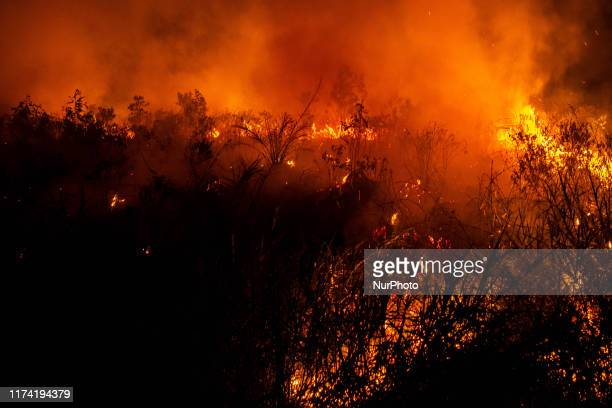 A view of burned house and fields on October 07 2019 in Pekanbaru regency Riau Province Indonesia The fires and haze is mostly humanmade much of it...