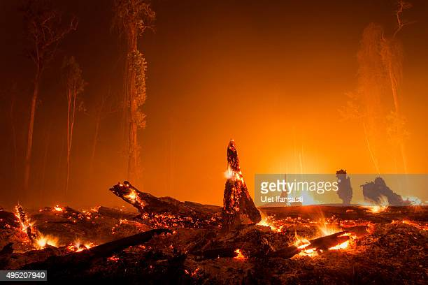 A view of burned stumps as peatland forest is cleared by burning for a palm oil plantation at a company's grounds on November 1 2015 in the outskirts...