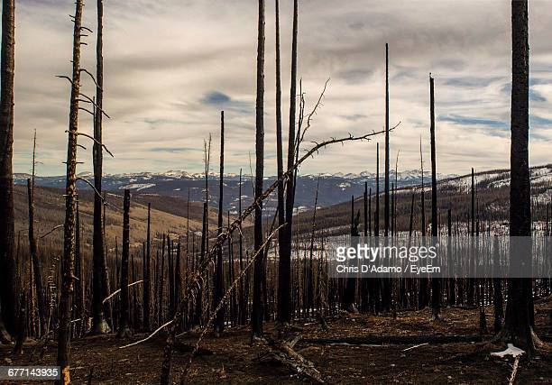 View Of Burnt Forest Against Cloudy Sky