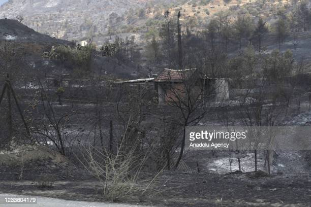 View of burnt trees after it was announced that the fire, which started yesterday and continued for two days is under control in Limassol, Cyprus on...