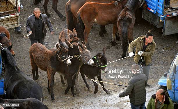 A view of bustling Liaobei Livestock Market in Yemaotai township of Faku county on April 11 2016 in Liaoning China The market with traders all over...