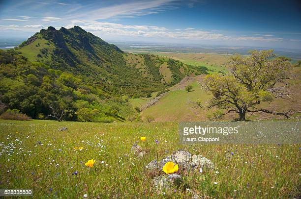 View of butte and wildflowers; sutter buttes california united states of america