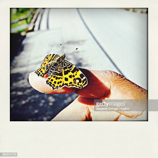View Of Butterfly On Human Finger
