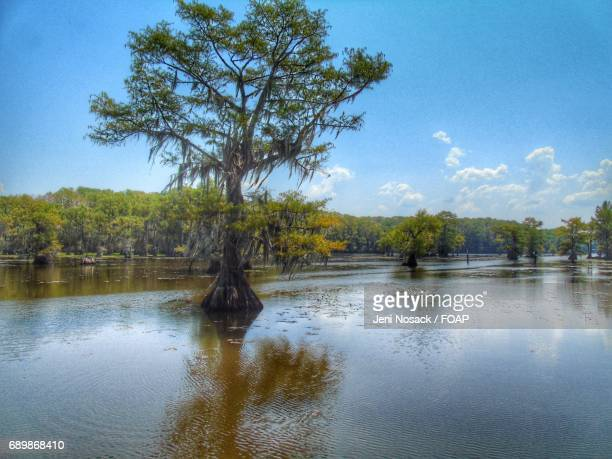 View of Caddo Lake, Texas