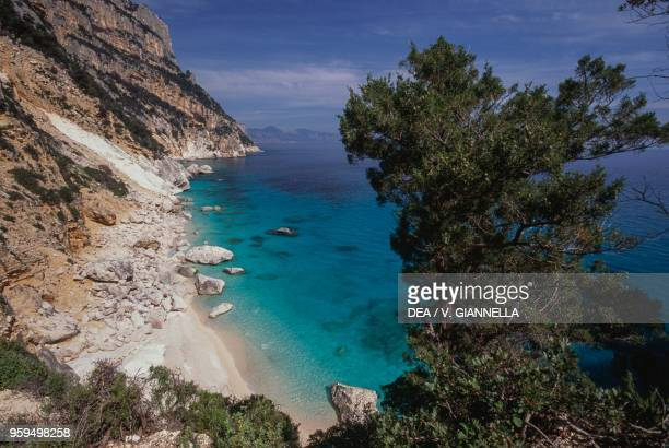View of Cala Goloritze from above with Phoenician Juniper in the foreground National Park of the Bay of Orosei and Gennargentu Ogliastra Sardinia...