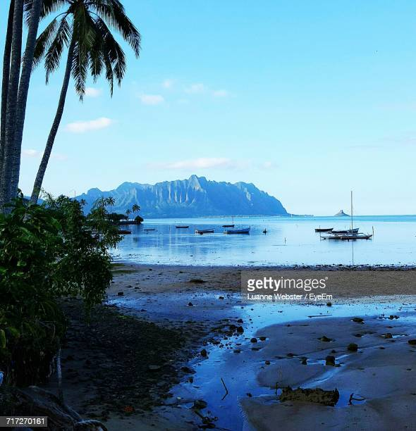 view of calm beach against blue sky - the webster stock pictures, royalty-free photos & images