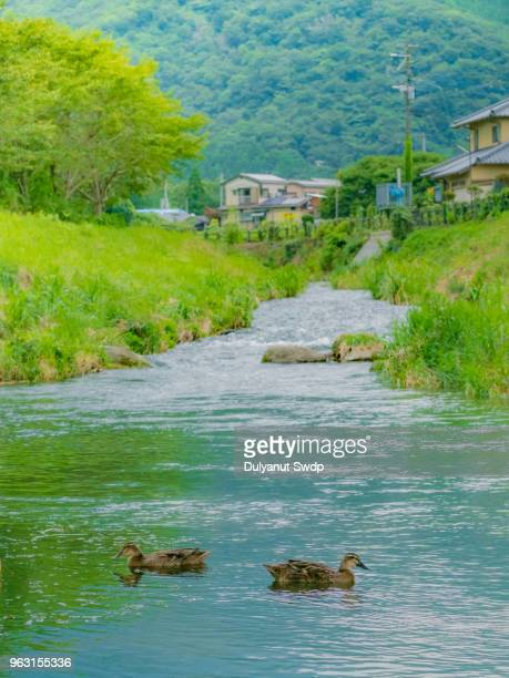 View of Canal with Duck swimming in Yufuin town, Oita, Japan