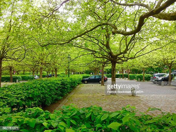 View Of Car Parked In Park