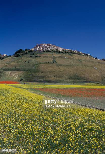 View of Castelluccio di Norcia from the blooming fields of Pian Grande, Monti Sibillini National Park, Umbria, Italy.