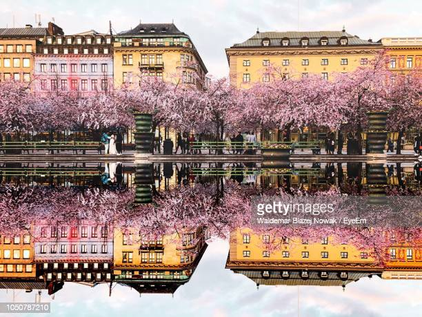 view of cherry blossom by building - stockholm stock pictures, royalty-free photos & images