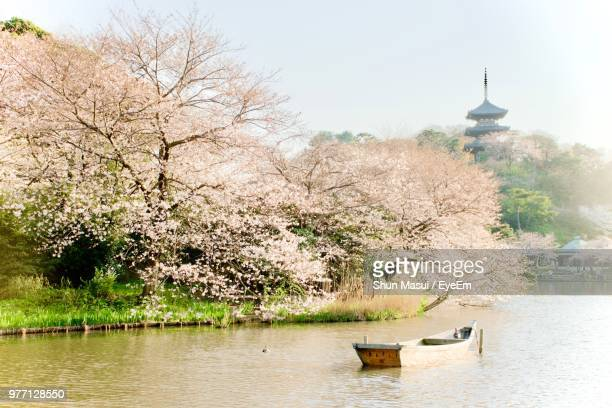 View Of Cherry Trees In Lake