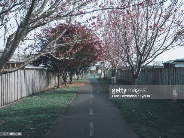 view of cherry trees on footpath - hamilton new zealand stock photos and pictures
