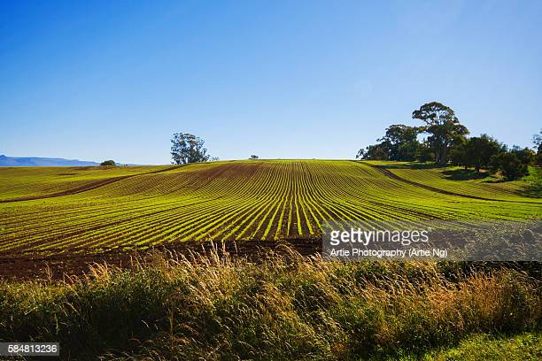 View of Clear Blue Sky with Vegetable Farm in the Foreground in Devonport, North Tasmania, Australia