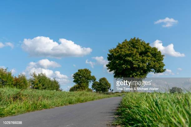 view of country road of schleswig holstein in germany. - schleswig holstein stock photos and pictures