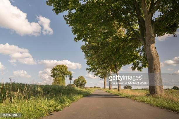 view of country road of schleswig holstein in germany. - tina terras michael walter stock-fotos und bilder