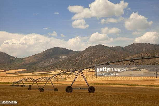 View of cut wheat through irrigation mechanism