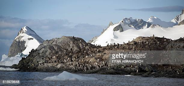View of Cuverville Island in the western Antarctic peninsula on March 04 2016 Waddling over the rocks legions of penguins hurl themselves into the...