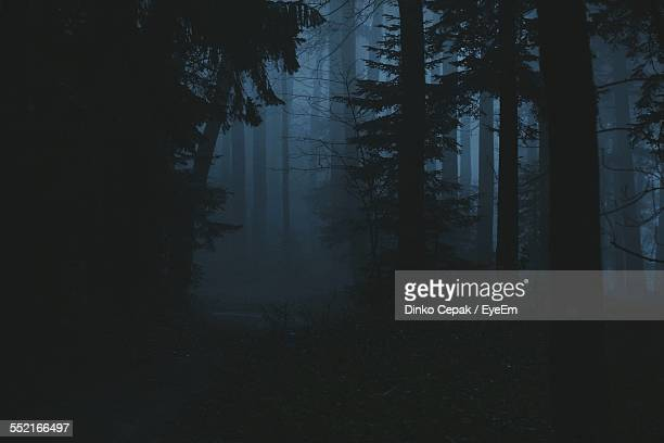 view of dark forest - fog stock pictures, royalty-free photos & images