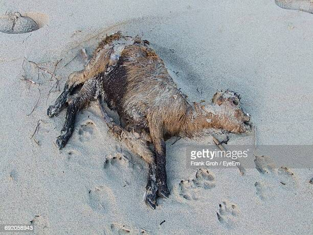 view of dead animal - dead animal stock pictures, royalty-free photos & images