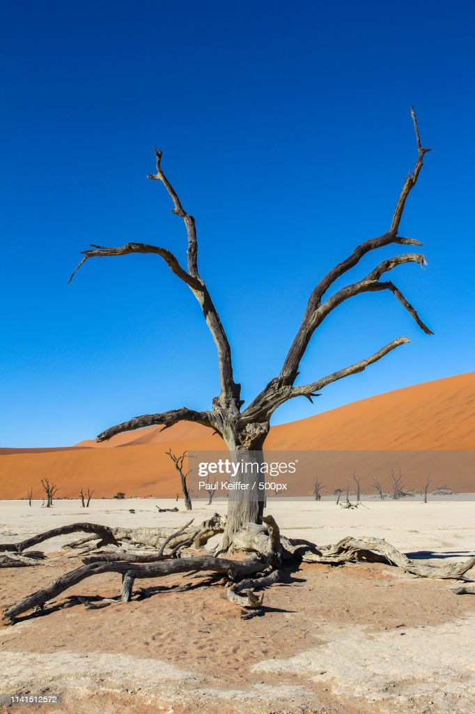 View of dead tree in desert : Stock Photo