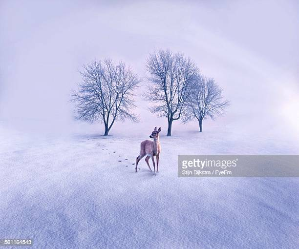 View Of Deer On Snow Covered Landscape