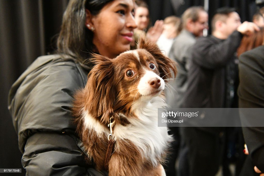 A view of designer Naeem Khan's pet, Raja, backstage for Naeem Khan during New York Fashion Week: The Shows at Gallery I at Spring Studios on February 13, 2018 in New York City.