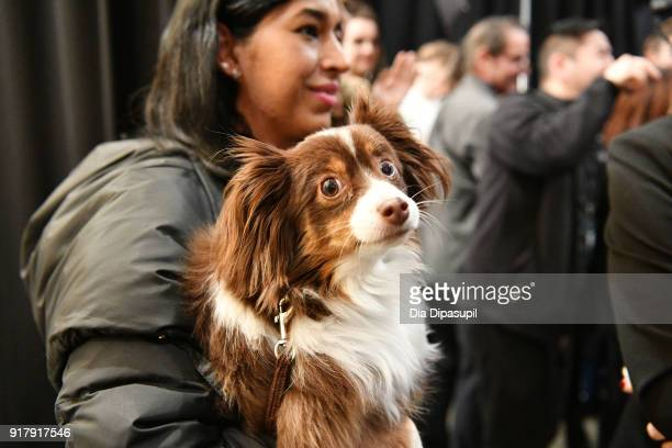 A view of designer Naeem Khan's pet Raja backstage for Naeem Khan during New York Fashion Week The Shows at Gallery I at Spring Studios on February...
