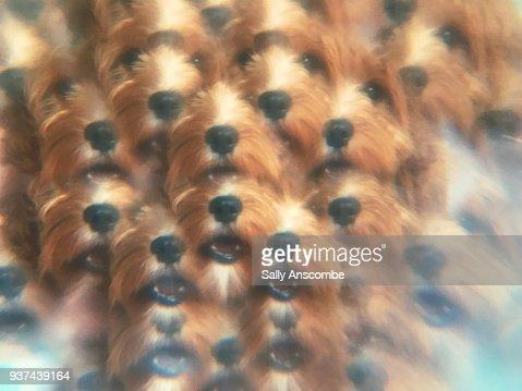 View of dog distorted through a prism