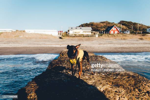 view of dog on beach - koukichi stock pictures, royalty-free photos & images