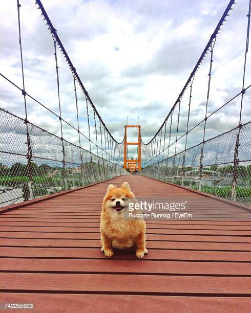 view of dog on bridge against sky - pomeranian stock photos and pictures