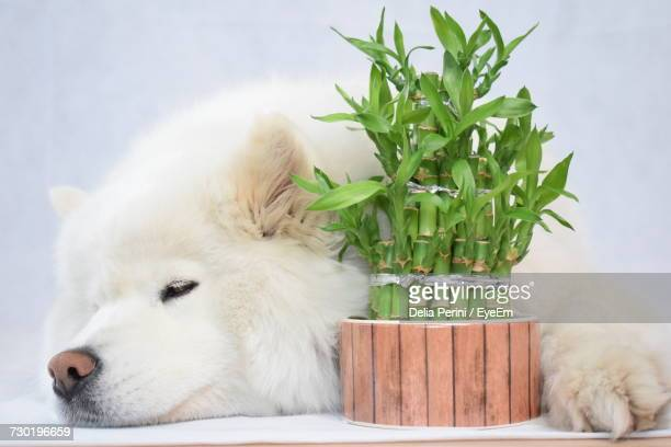 view of dog - bamboo plant stock pictures, royalty-free photos & images