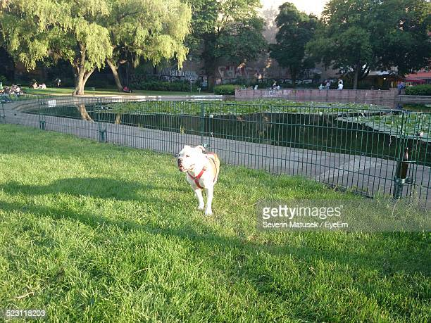 View Of Dog Running In Park In Sunlight