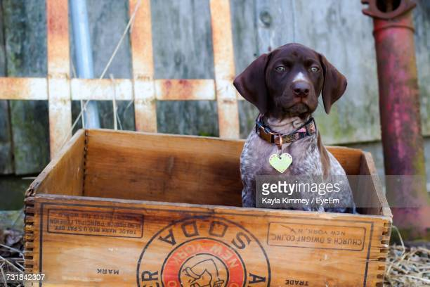 View Of Dog Sitting In Wooden Box
