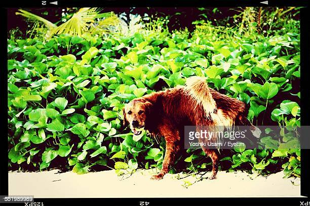 View Of Dog Urinating In Garden
