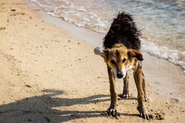 View Of Dog Walking On Beach