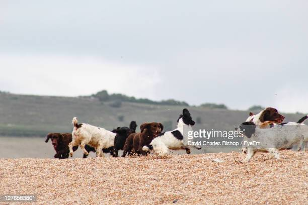 view of dogs on beach against sky - medium group of animals stock pictures, royalty-free photos & images