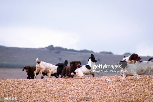 view of dogs on field against sky - medium group of animals stock pictures, royalty-free photos & images