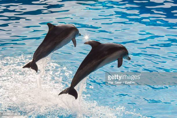 view of dolphins swimming in the sea - dolphin stock pictures, royalty-free photos & images
