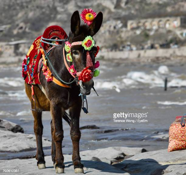 View Of Donkey On Beach
