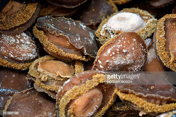 View of dried Abalone with a value of about 2 million USD seized by the Ministry of Agriculture Forestry and Fisheries and the Enforcement Unit of...