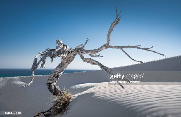 view of driftwood on land against clear blue sky - arid stock pictures, royalty-free photos & images
