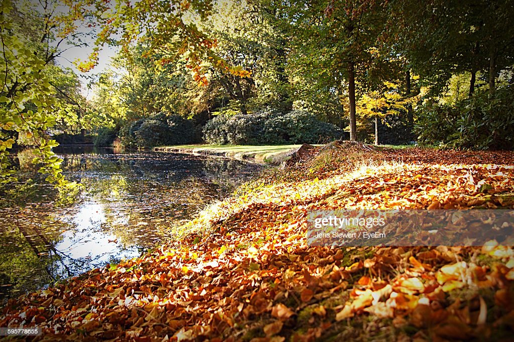 View Of Dry Leaves Fallen By Lake At Park : Stock-Foto