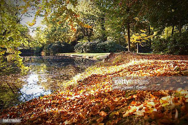 View Of Dry Leaves Fallen By Lake At Park