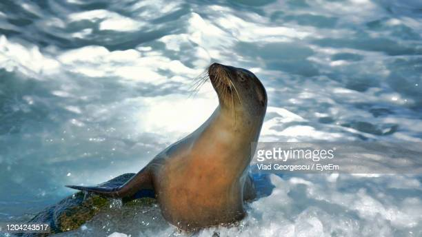view of duck swimming in sea - vlad models stock pictures, royalty-free photos & images