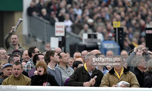 View of emotional racing fans and punters watching the action on course during the 2012 Cheltenham National Hunt Festival at Cheltenham racecourse in...